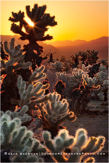 photo of Cholla cactus by Sean Bagshaw