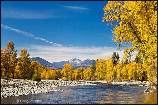 Methow River and cottonwood trees