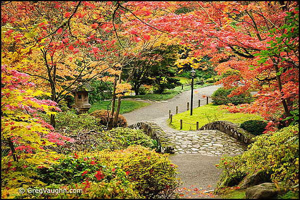 Japanese Garden in Seattle in Autumn